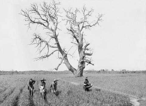 Sabres, Le Nan, châtaigner, sarcleuses, 2 avril 1913