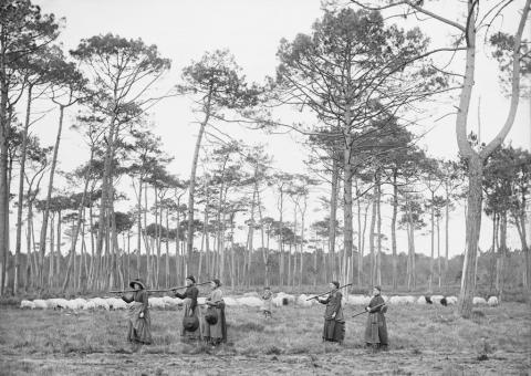 Félix ARNAUDIN, Lüe, pins Lilère, 21 janvier 1892