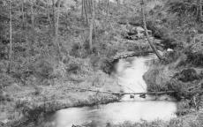 La Vignole, lapas roulés 16 janvier 1896