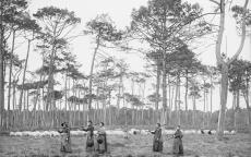 Femmes de Cantore allant sarcler - Lilère Lue 21 janvier 1892
